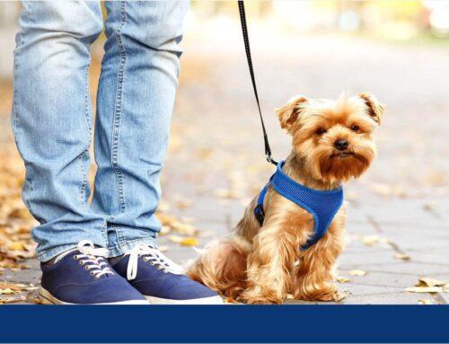 حمل حیوانات خانگی به استرالیا