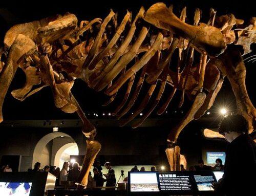 بزرگترین دایناسور یافت شده در استرالیا