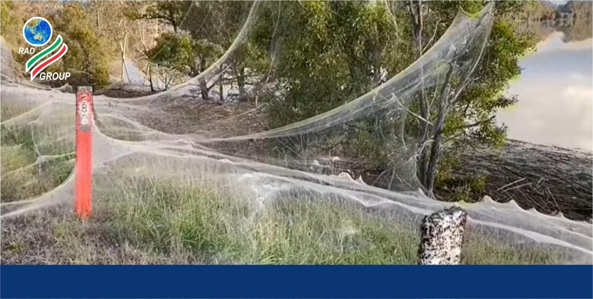 تار عنکبوت عجیب در ایالت ویکتوریا